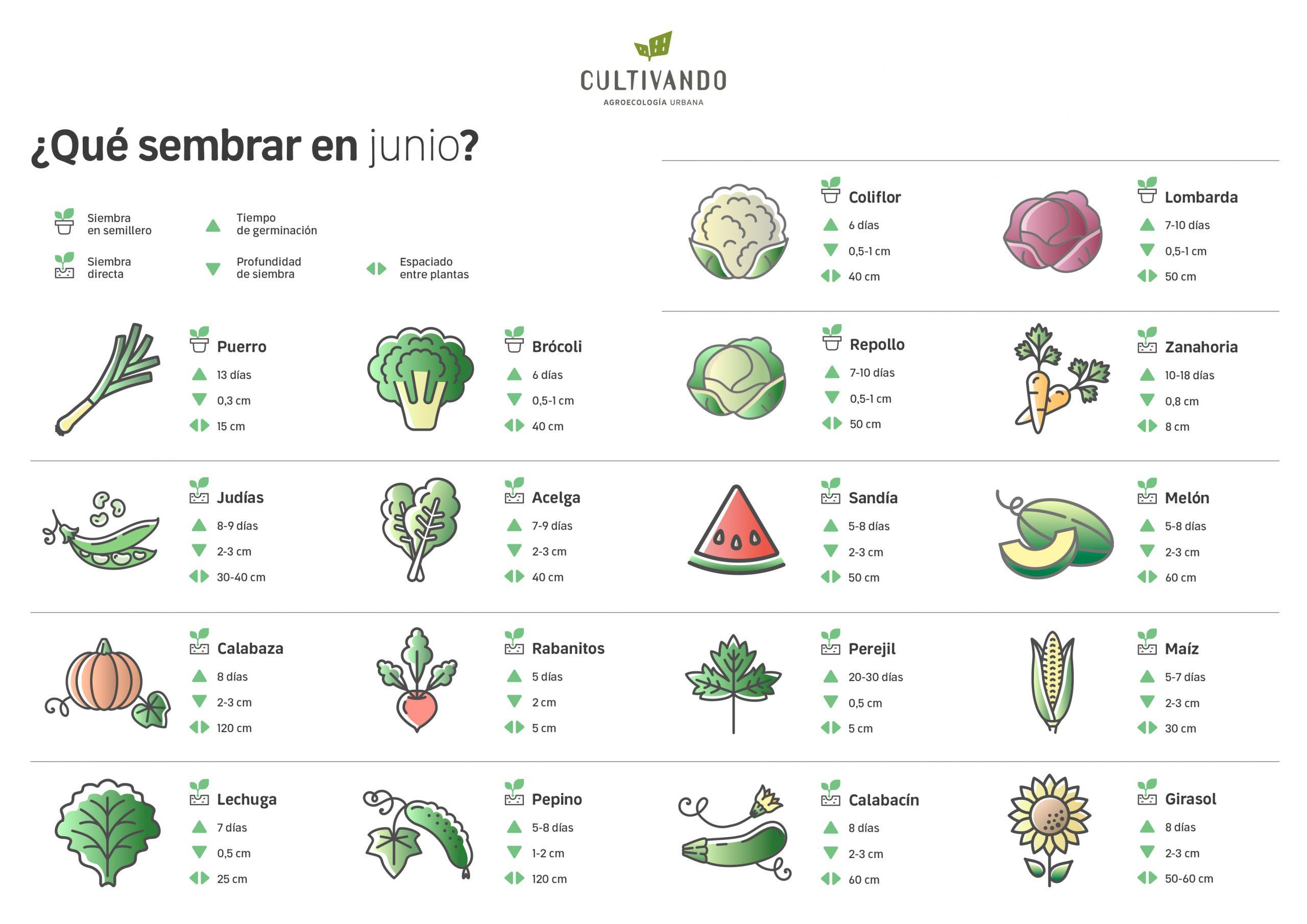 ¿Qué sembrar en Junio? Nuestros amigos de Cultivando nos lo cuentan